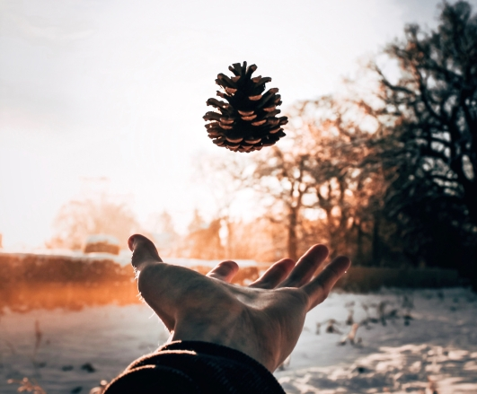Tossed Pinecone